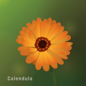 Benefits of calendula flower